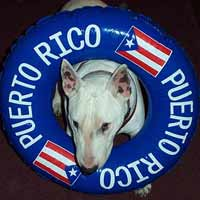 Teddy Loves Puerto Rico